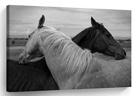 horse canvas2